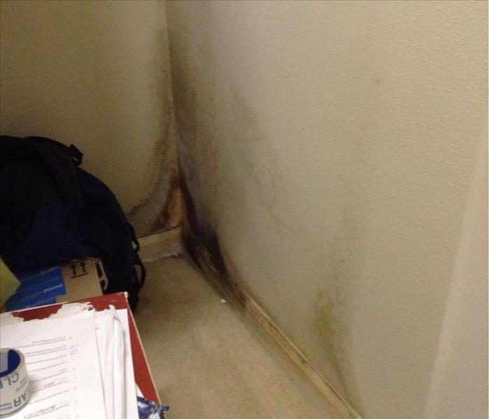 Mold Remediation in Oconomowoc, WI Before